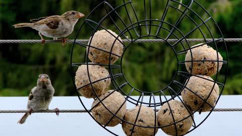 Feeding an agile bird