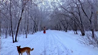 playful dogs during winter season Beauty