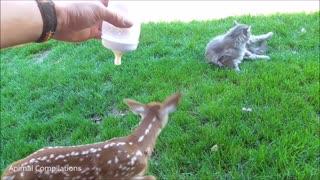 Baby Deer Jumping Hopping