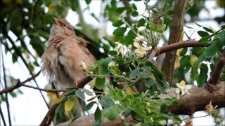 Closeup of a cute bird