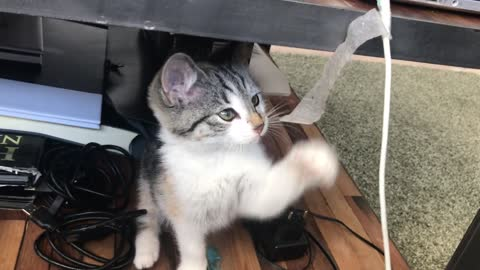 Nice baby cat playing with tape