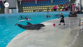 Adorable Toddler Plays Fetch With Playful Dolphin   Country Living
