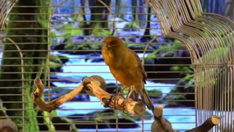 Watch this very cool bird sang