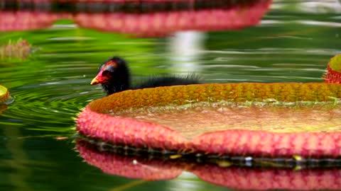 bird swimmin