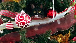 The little cat is inside the tree