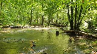 Calm river rising like a phoenix