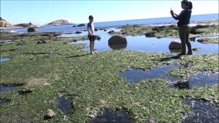 Algarrobo beach with algae and seaweed in Chile