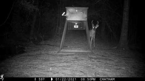 Bobcat and 8 point on The Back Road