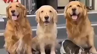 funny video of cats and dogs taking pictures for family