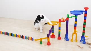 Cats and Domino Funny omg