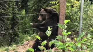 Boo Bear Has Bear-Y Good Scratch