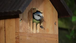 Cute bird inside a bird house