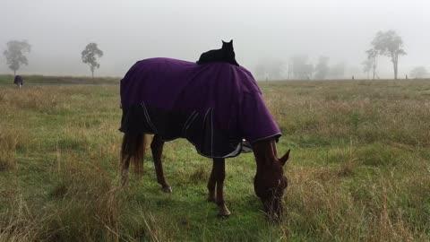 Sunday morning horse ride