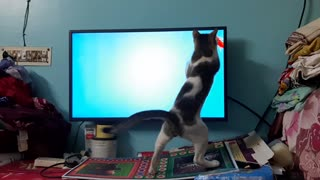 Kitty Tries to Catch Fish During Quarantine