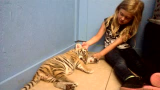 Little Girl Kisses A Baby Tiger