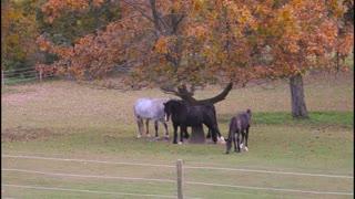 Beautiful horses in the fall
