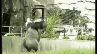 funny animals being weird