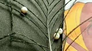 best song- Radha ke Prabhu girdhar nagar..