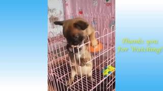 Funny pets animal comedy sceene