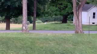 Albino Deer Spotted Near House