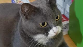 Cat Has Weird Reaction to Comb