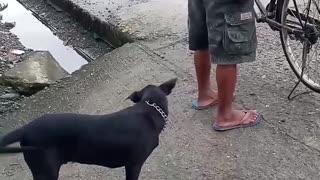 Free Bread Drives Dog Bonkers