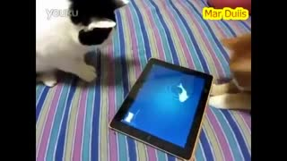 Funny cat trying to catch the fish