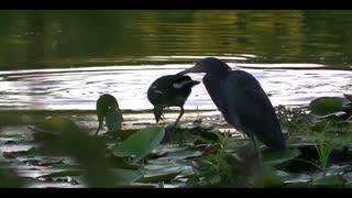 Wild Birds Beautiful Nature Scene