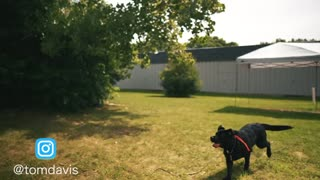 SAFELY TRAIN YOUR DOGS COMPLETELY OFF LEASH!
