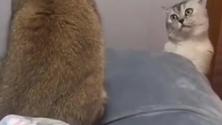 Cats fighting on bad