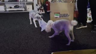 Having fun with Dogs