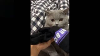 Cutest And funniest pets try not to laugh