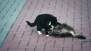 Funny and cute cats play in the street