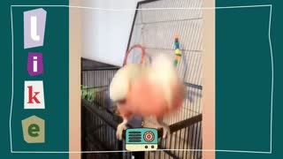 Shy parrot talking to human, funny cute parrot