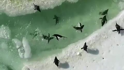 Penguin waterpark