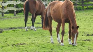 North American Marcher 2021 long sleeve horses animal world
