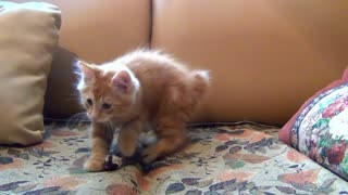 Little cat playing with his mouse toy