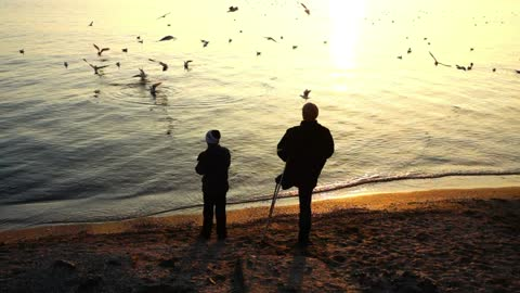 Father and son feeding seagulls on the shore of a lake - With beautiful music