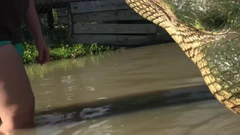 Biggest Alligator in Texas