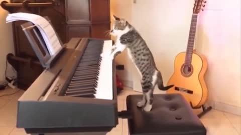 Cat plays Still D.R.E.