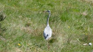 Lost Female Bird Heron Water
