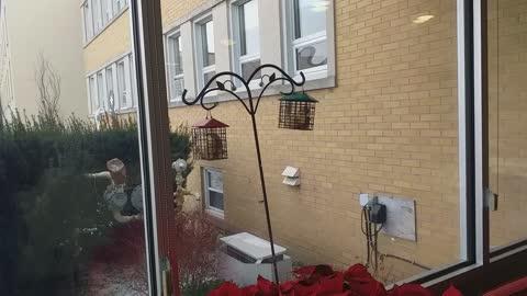Bird food stealing squirrel