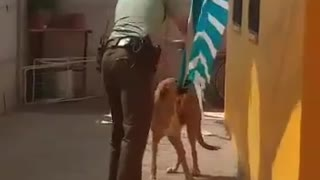 Hopeless Dog Rescued By Police Officer