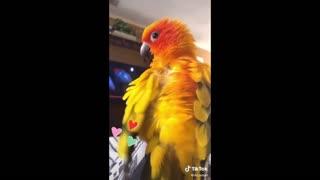 Funny Talking Parrots