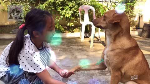 This dog can do adorable tricks