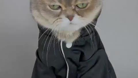 Kim Cat Funny