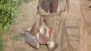 How To Catch Fish With Scarves