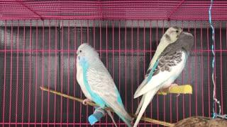 beautiful birds singing (13)
