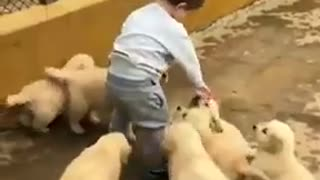 A small child plays with small Adash sweet dogs