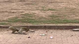 Street Artist Monkey Draws Circles
